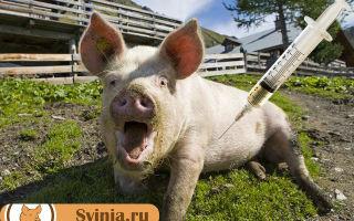 Снотворное для свиней: показания, применение