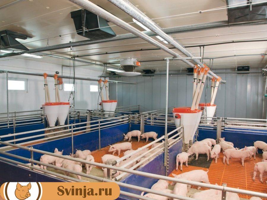 оборудование в свиноводстве