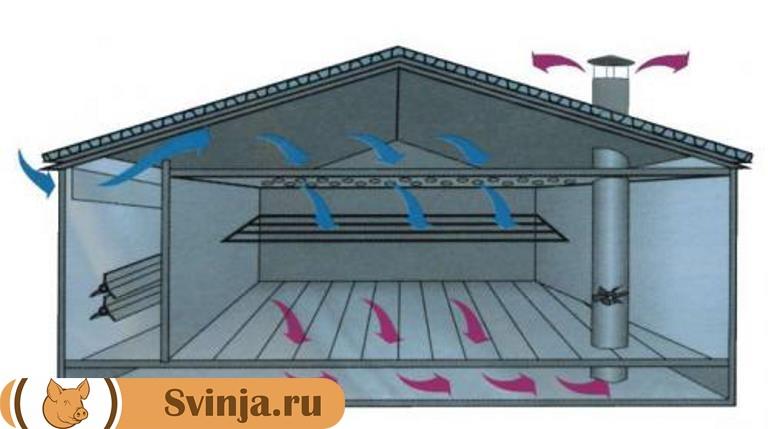 вентиляция в свинарнике