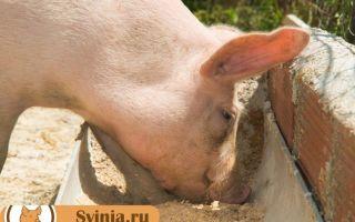 Кормление свиней сухим (экструдированным) кормом: в чем польза