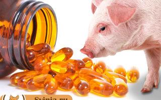 Чем полезен рыбий жир для свиней