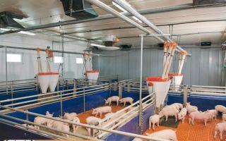 Основное оборудование в свиноводстве