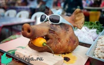 Голова свиньи